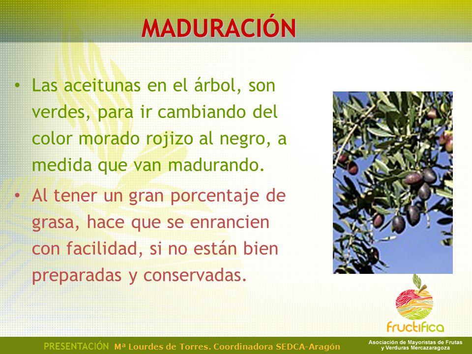 MADURACIÓN Las aceitunas en el árbol, son verdes, para ir cambiando del color morado rojizo al negro, a medida que van madurando.