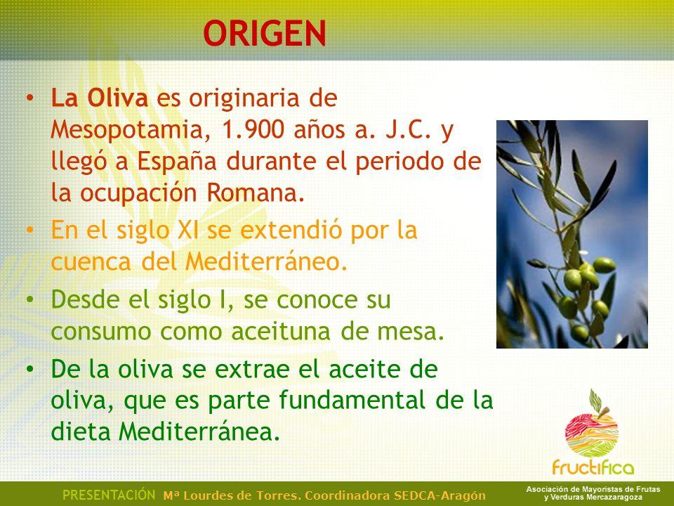 ORIGEN La Oliva es originaria de Mesopotamia, 1.900 años a. J.C. y llegó a España durante el periodo de la ocupación Romana.