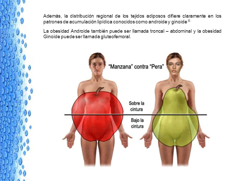 Además, la distribución regional de los tejidos adiposos difiere claramente en los patrones de acumulación lipídica conocidos como androide y ginoide 6.