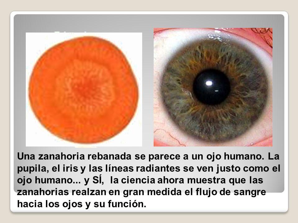 Una zanahoria rebanada se parece a un ojo humano