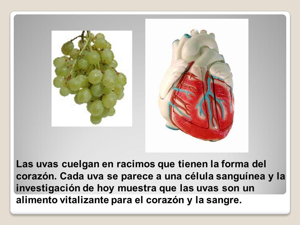 Las uvas cuelgan en racimos que tienen la forma del corazón