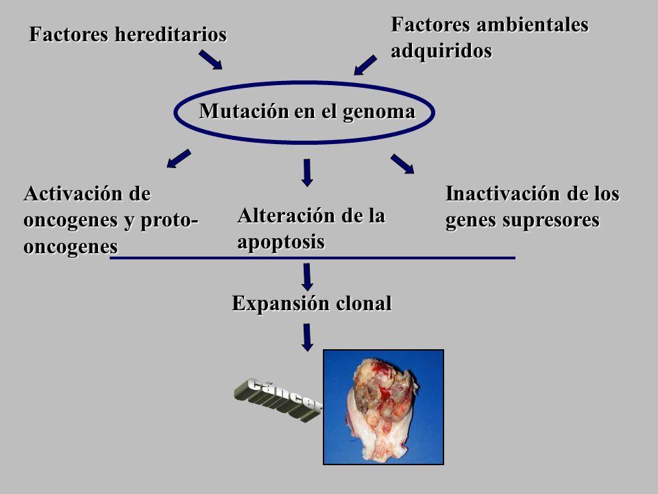 cáncer Factores ambientales adquiridos Factores hereditarios