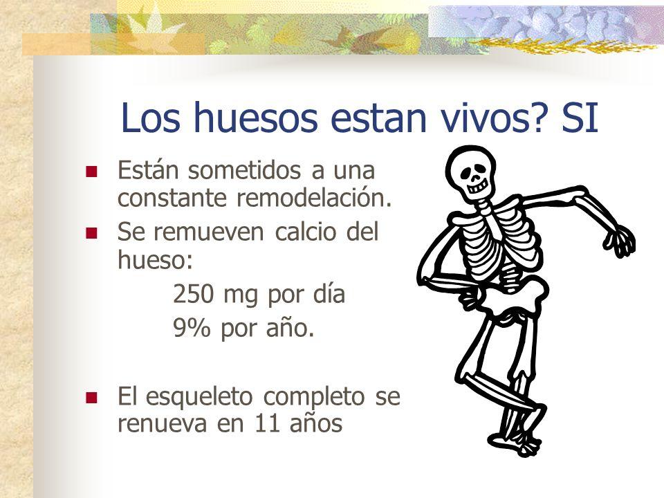 Los huesos estan vivos SI