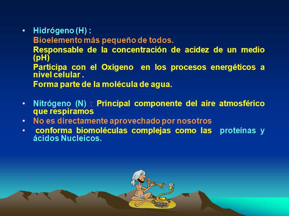 Hidrógeno (H) : Bioelemento más pequeño de todos. Responsable de la concentración de acidez de un medio (pH)
