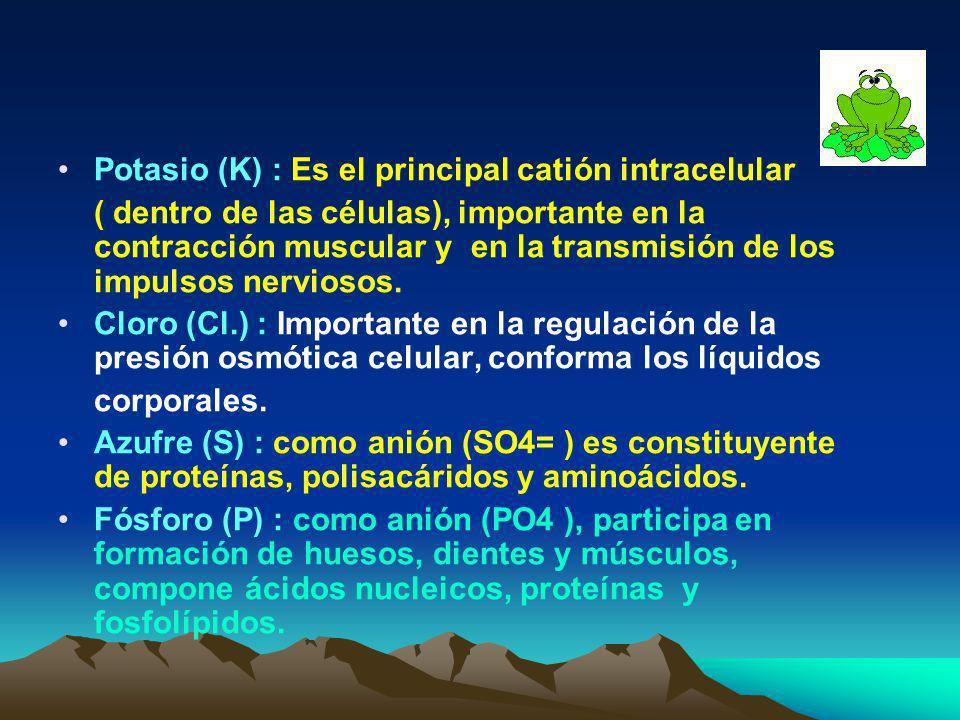 Potasio (K) : Es el principal catión intracelular
