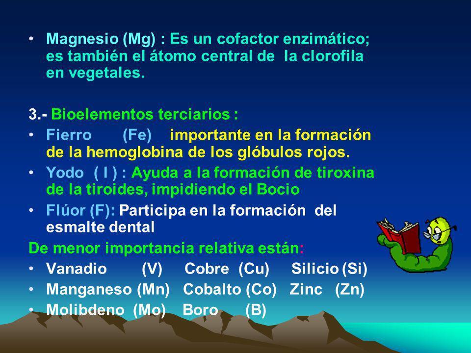 Magnesio (Mg) : Es un cofactor enzimático; es también el átomo central de la clorofila en vegetales.