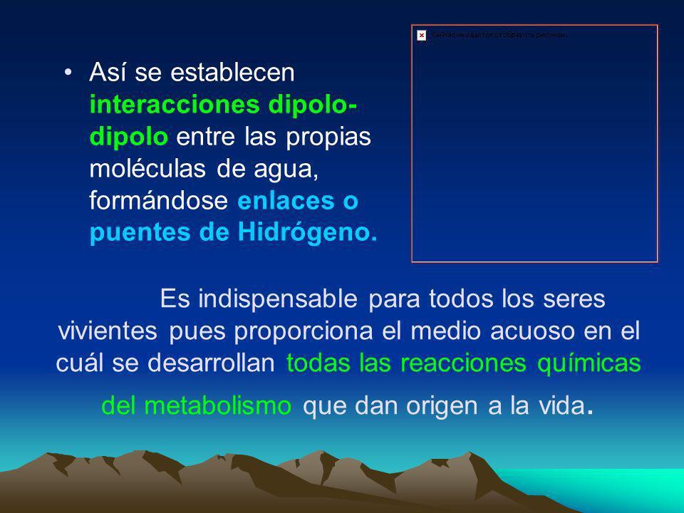 Así se establecen interacciones dipolo-dipolo entre las propias moléculas de agua, formándose enlaces o puentes de Hidrógeno.