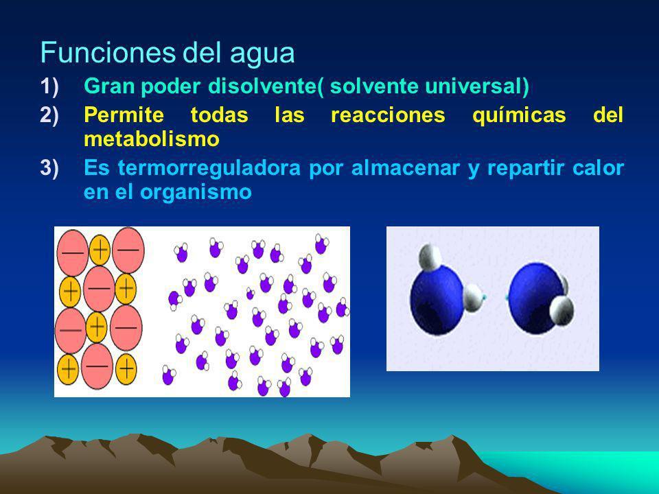 Funciones del agua Gran poder disolvente( solvente universal)