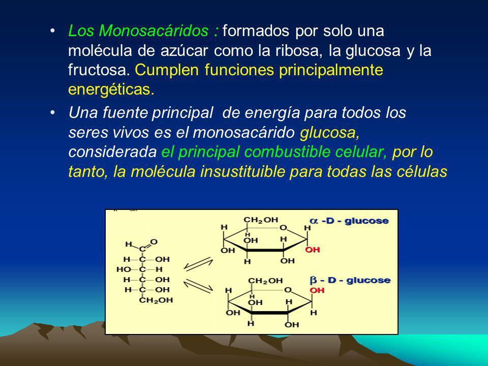 Los Monosacáridos : formados por solo una molécula de azúcar como la ribosa, la glucosa y la fructosa. Cumplen funciones principalmente energéticas.