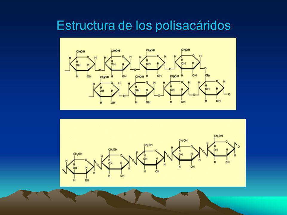Estructura de los polisacáridos