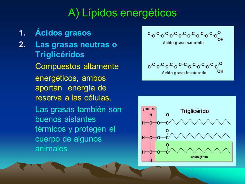 A) Lípidos energéticos
