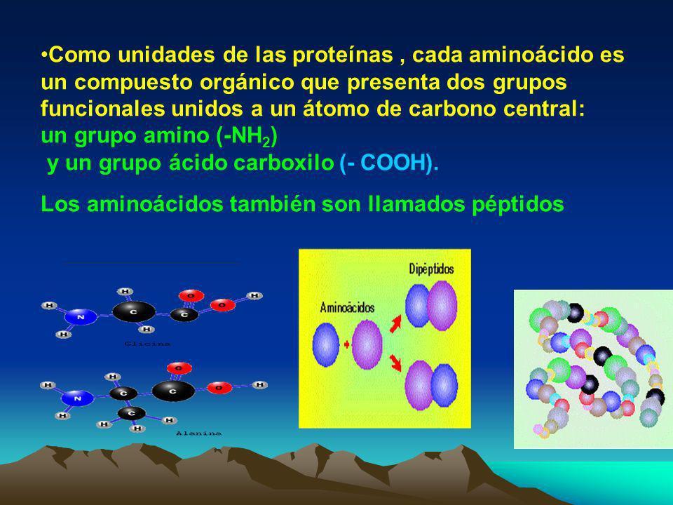 Como unidades de las proteínas , cada aminoácido es un compuesto orgánico que presenta dos grupos funcionales unidos a un átomo de carbono central: un grupo amino (-NH2) y un grupo ácido carboxilo (- COOH).