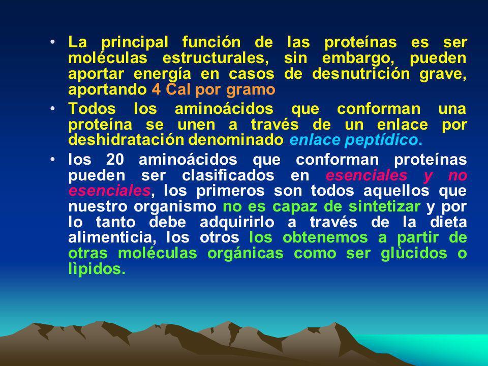 La principal función de las proteínas es ser moléculas estructurales, sin embargo, pueden aportar energía en casos de desnutrición grave, aportando 4 Cal por gramo