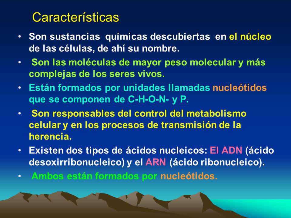 Características Son sustancias químicas descubiertas en el núcleo de las células, de ahí su nombre.