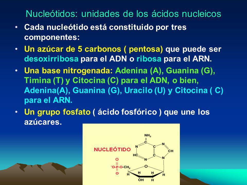 Nucleótidos: unidades de los ácidos nucleicos