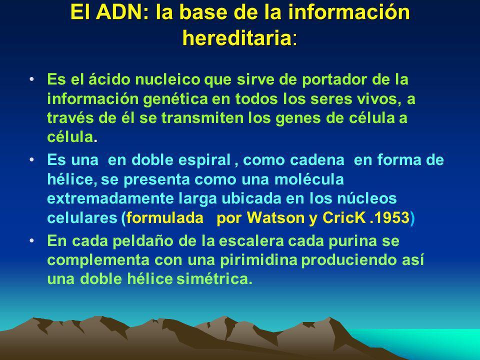 El ADN: la base de la información hereditaria: