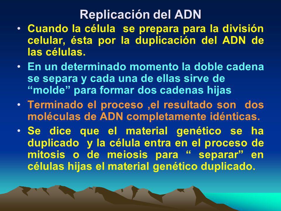 Replicación del ADN Cuando la célula se prepara para la división celular, ésta por la duplicación del ADN de las células.