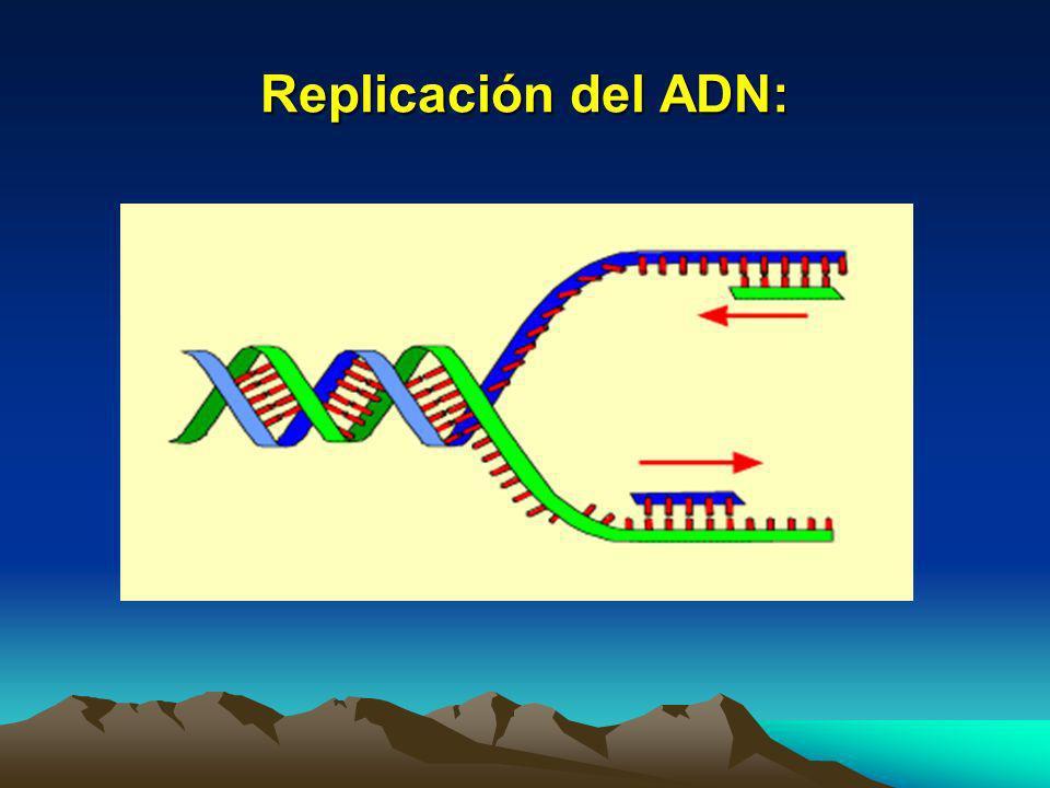 Replicación del ADN: