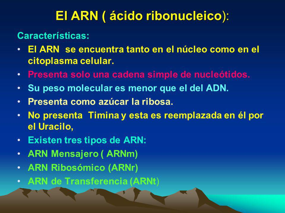 El ARN ( ácido ribonucleico):