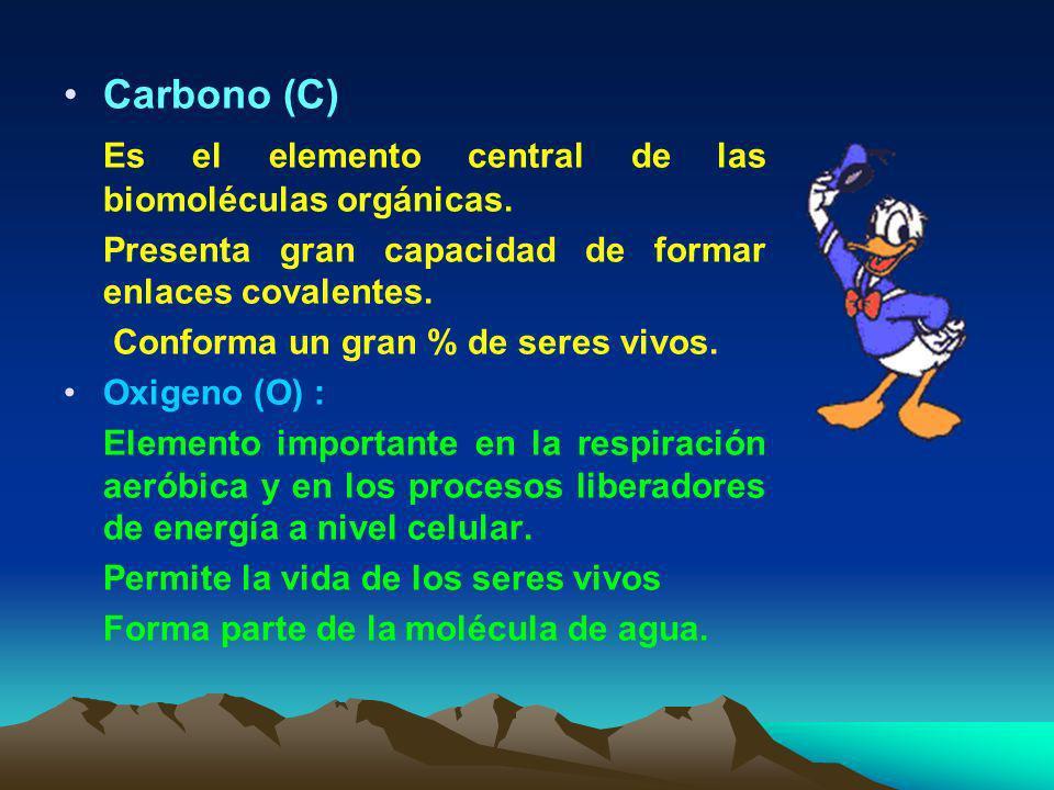 Es el elemento central de las biomoléculas orgánicas.