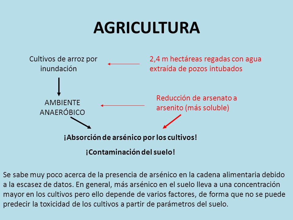 ¡Absorción de arsénico por los cultivos! ¡Contaminación del suelo!