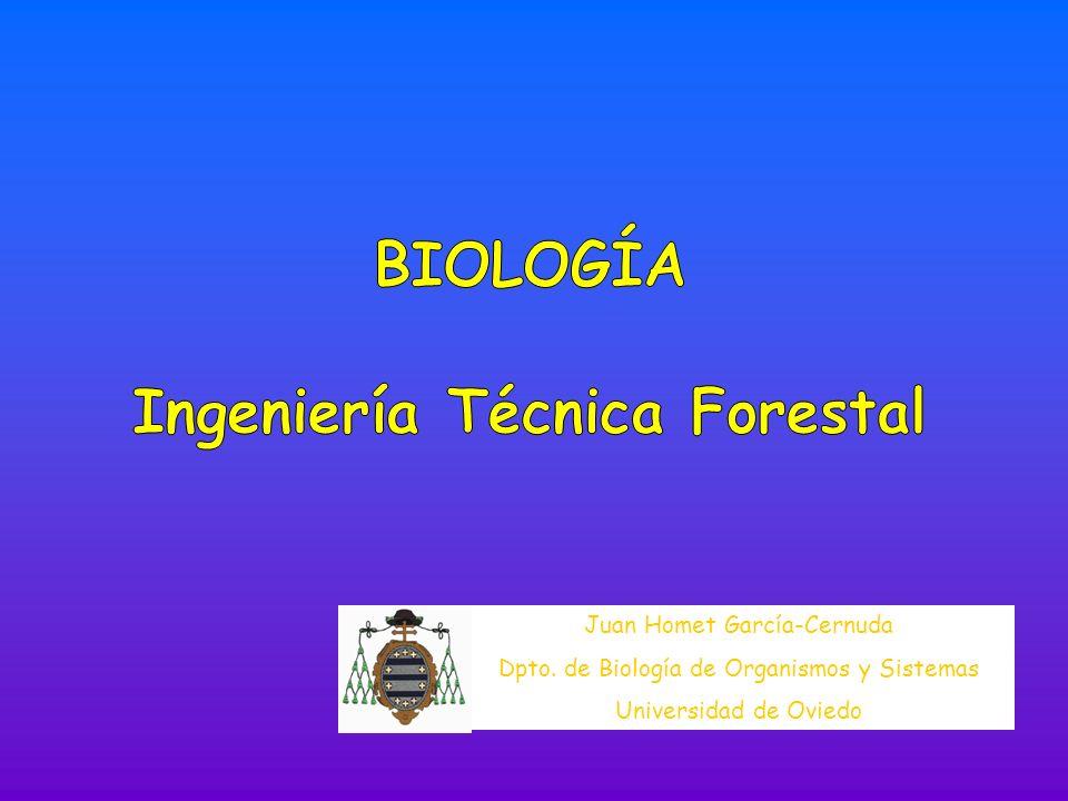 Ingeniería Técnica Forestal