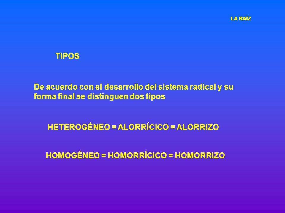 HOMOGÉNEO = HOMORRÍCICO = HOMORRIZO