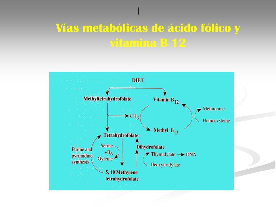 Vías metabólicas de ácido fólico y