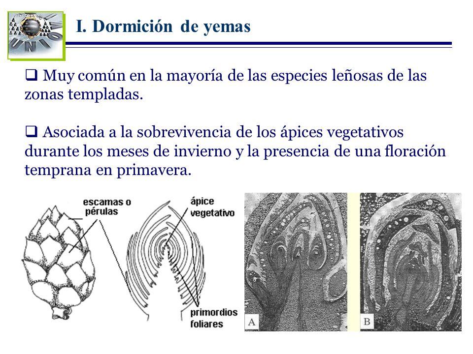 I. Dormición de yemas Muy común en la mayoría de las especies leñosas de las zonas templadas.