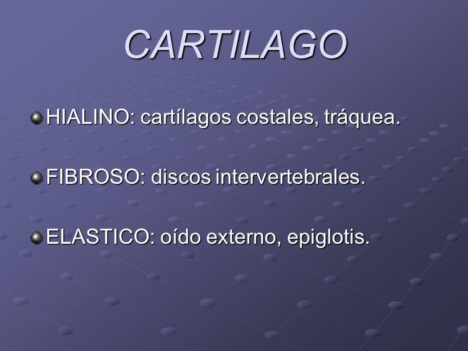 CARTILAGO HIALINO: cartílagos costales, tráquea.