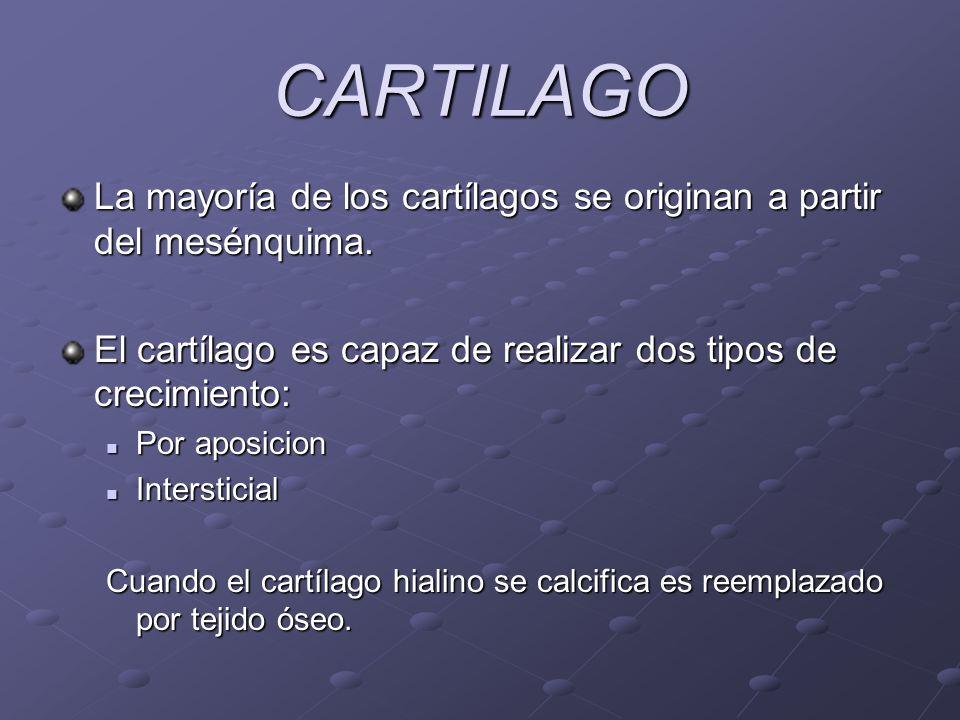 CARTILAGO La mayoría de los cartílagos se originan a partir del mesénquima. El cartílago es capaz de realizar dos tipos de crecimiento: