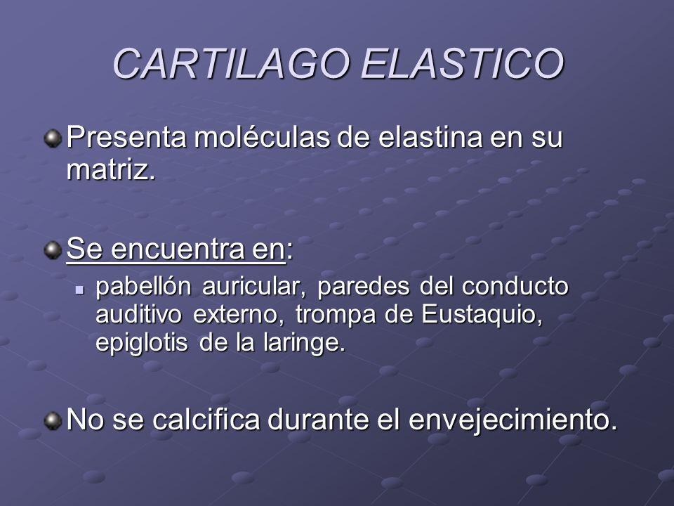 CARTILAGO ELASTICO Presenta moléculas de elastina en su matriz.