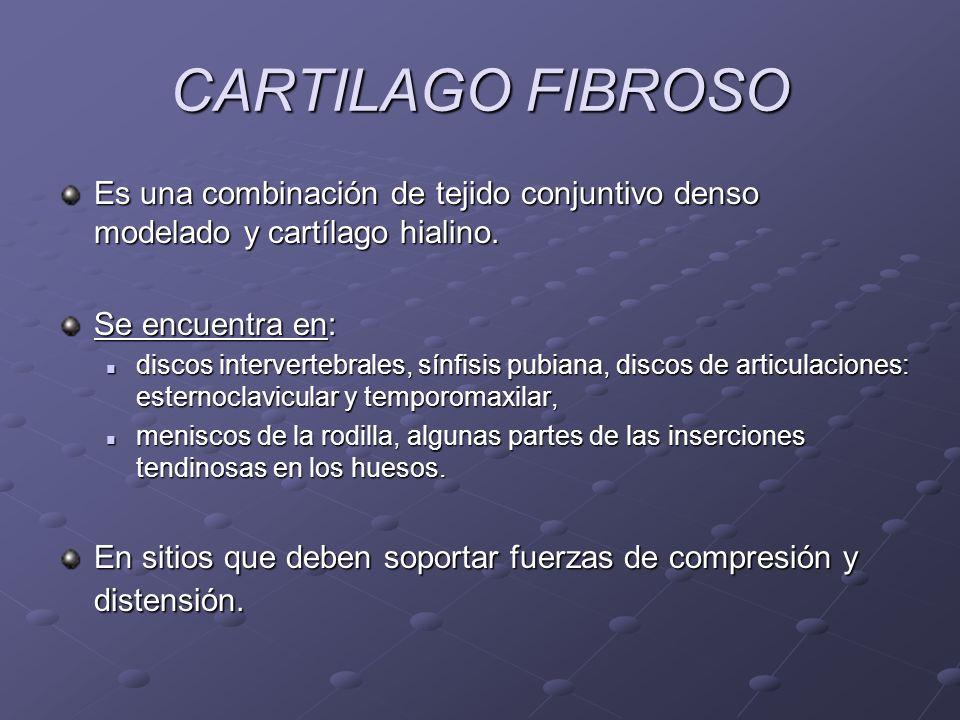 CARTILAGO FIBROSO Es una combinación de tejido conjuntivo denso modelado y cartílago hialino. Se encuentra en: