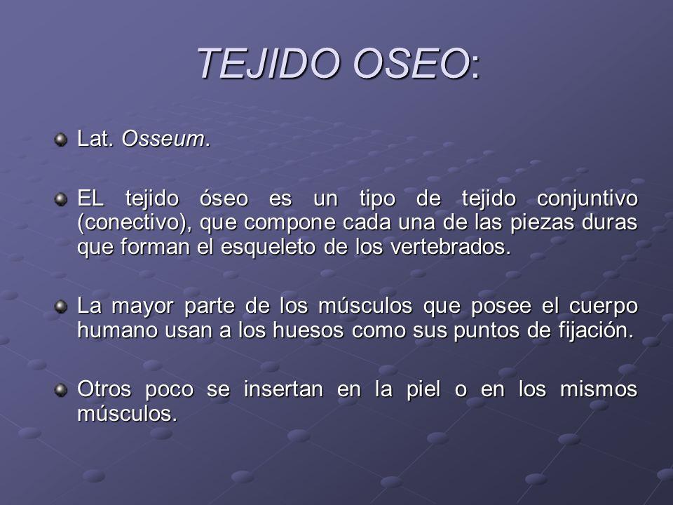 TEJIDO OSEO: Lat. Osseum.
