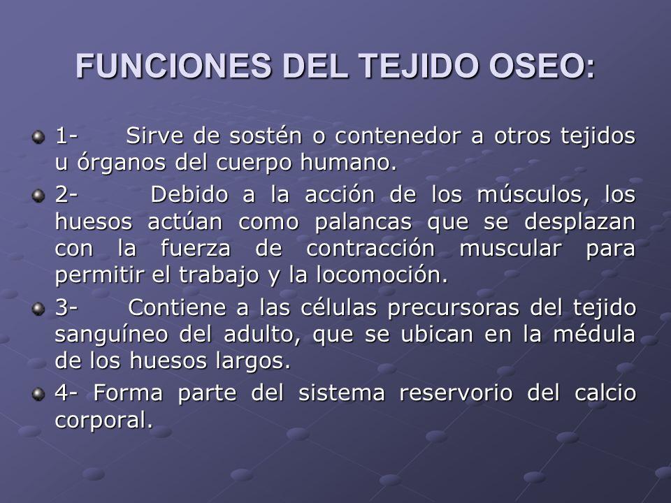 FUNCIONES DEL TEJIDO OSEO: