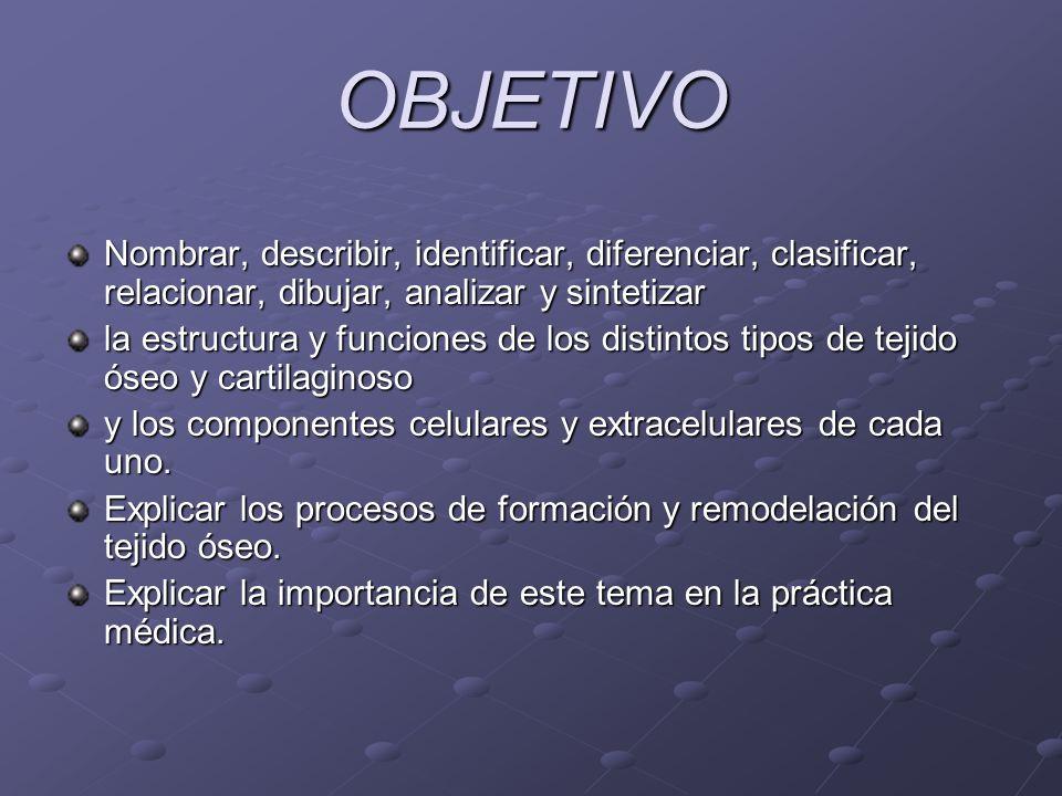 OBJETIVO Nombrar, describir, identificar, diferenciar, clasificar, relacionar, dibujar, analizar y sintetizar.