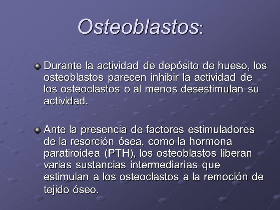 Osteoblastos: