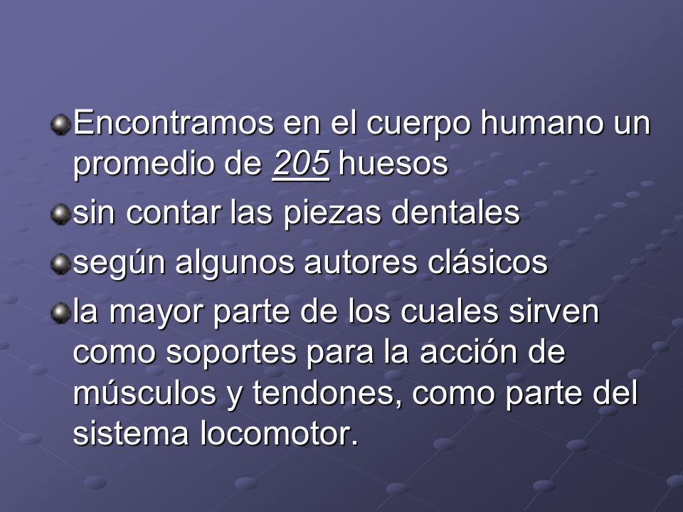 Encontramos en el cuerpo humano un promedio de 205 huesos