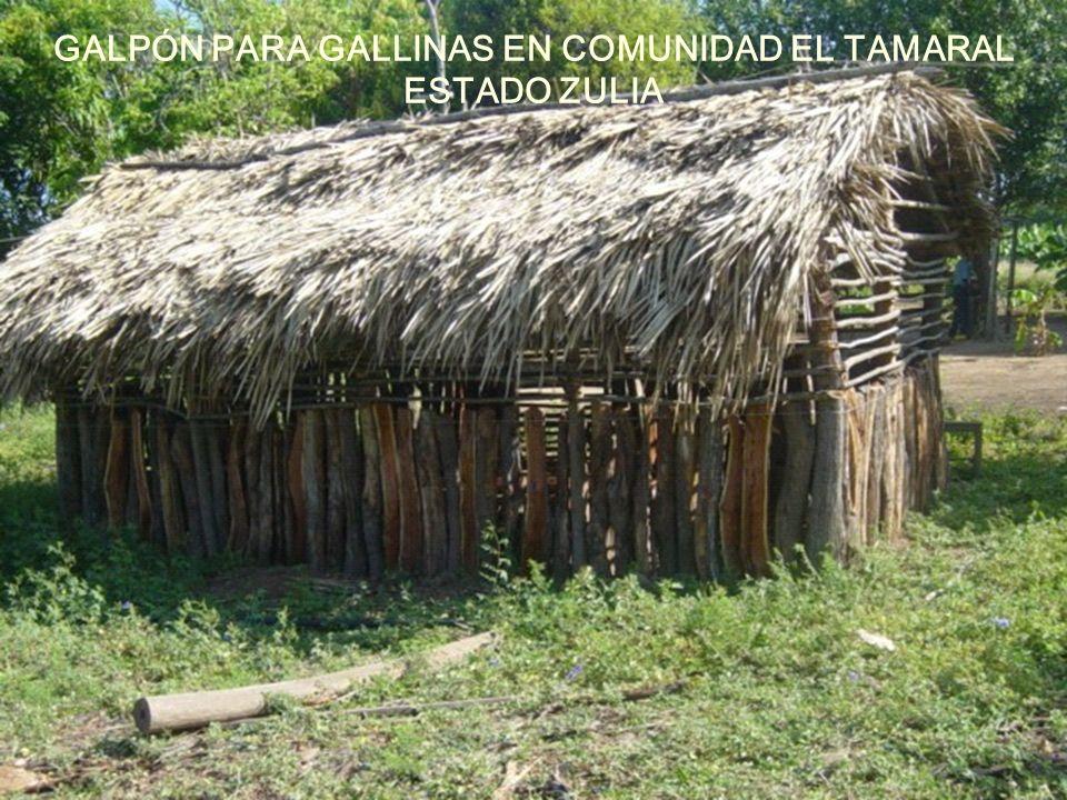 GALPÓN PARA GALLINAS EN COMUNIDAD EL TAMARAL ESTADO ZULIA