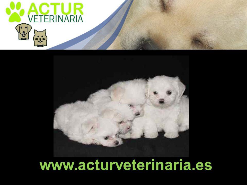 www.acturveterinaria.es