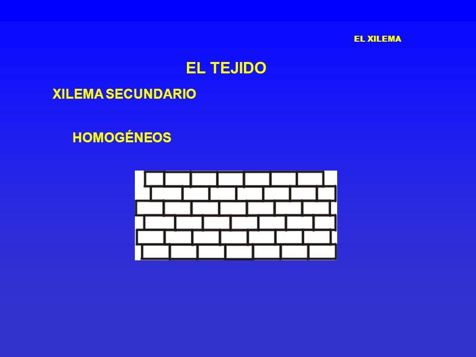 EL XILEMA EL TEJIDO XILEMA SECUNDARIO HOMOGÉNEOS