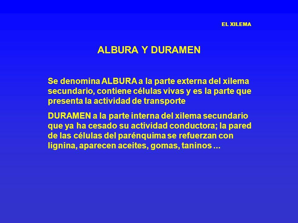 EL XILEMA ALBURA Y DURAMEN.