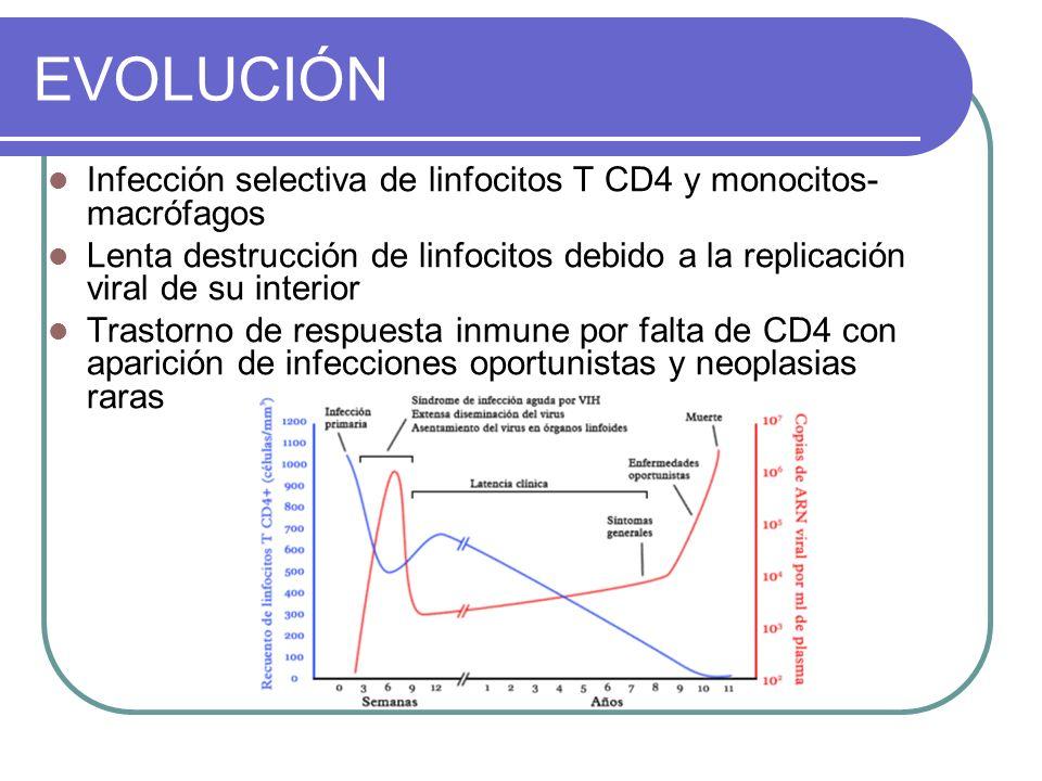 EVOLUCIÓN Infección selectiva de linfocitos T CD4 y monocitos-macrófagos.