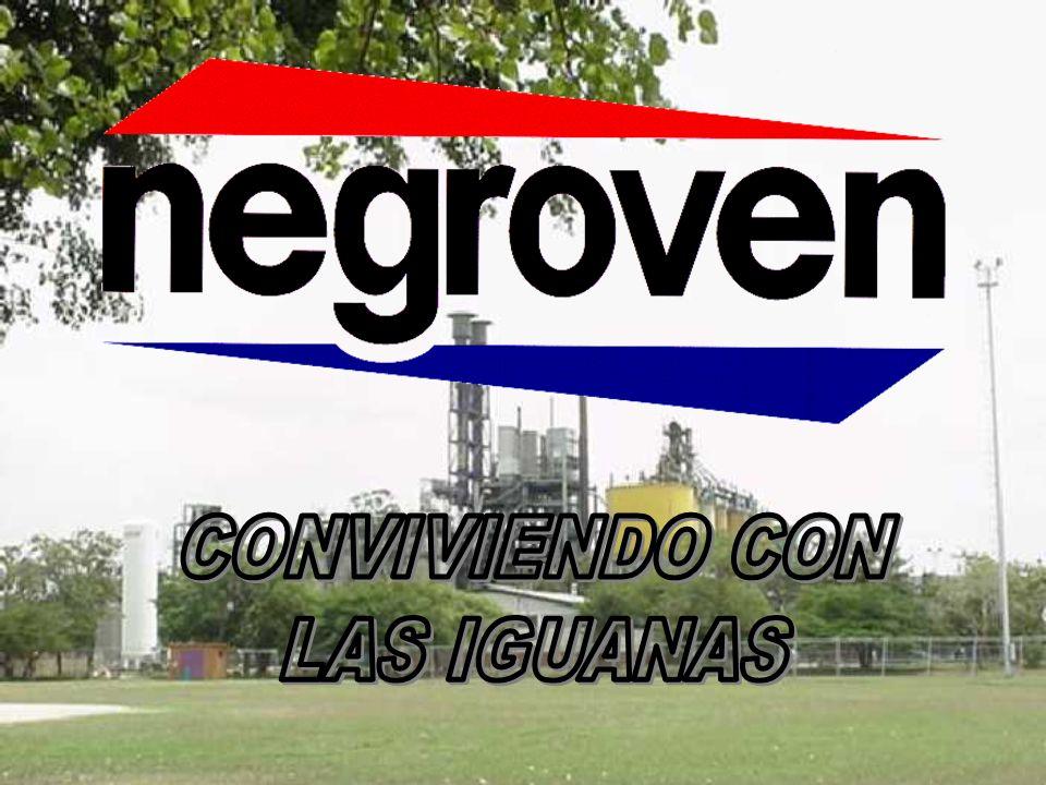 CONVIVIENDO CON LAS IGUANAS