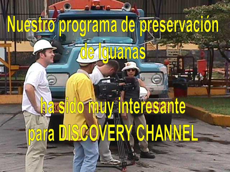 Nuestro programa de preservación de Iguanas ha sido muy interesante
