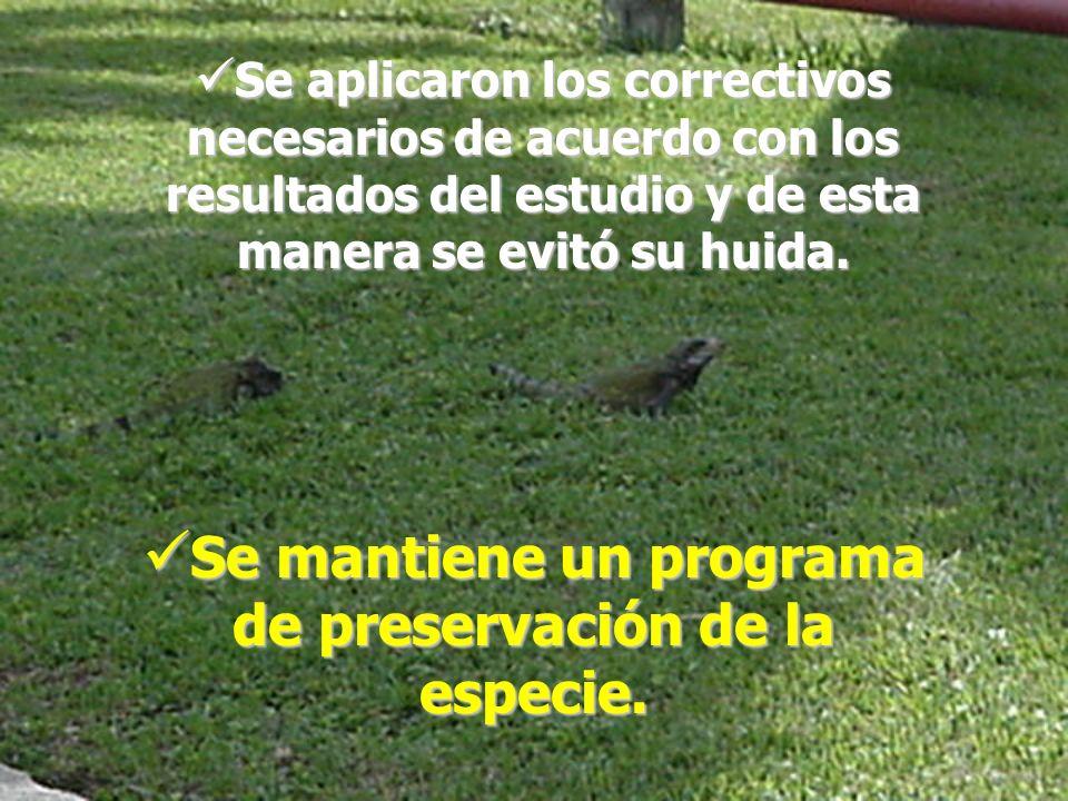 Se mantiene un programa de preservación de la especie.