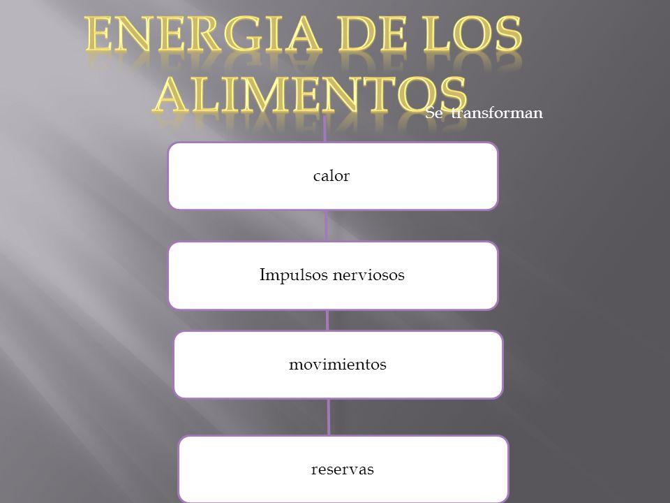 ENERGIA DE LOS ALIMENTOS