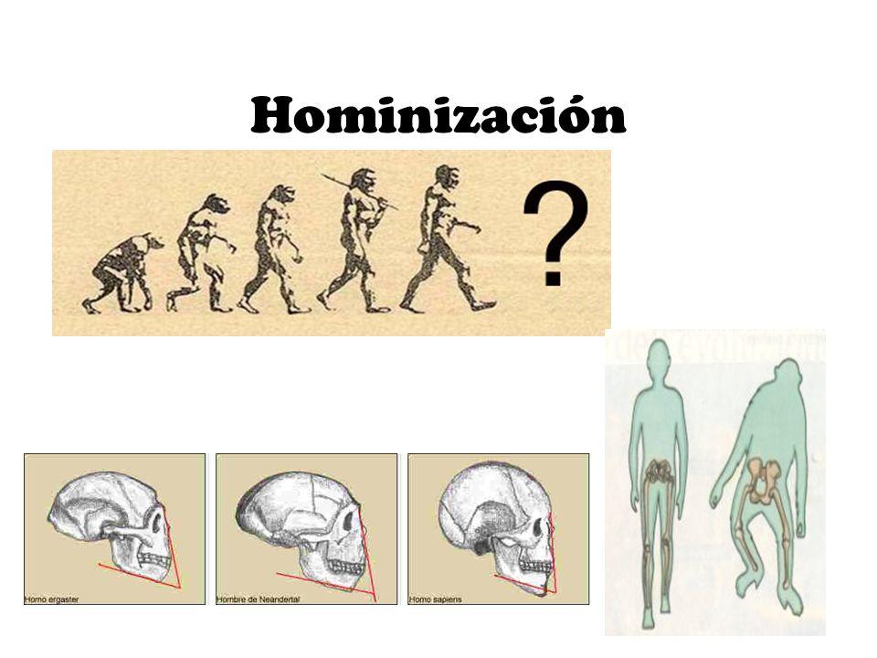 Hominización .