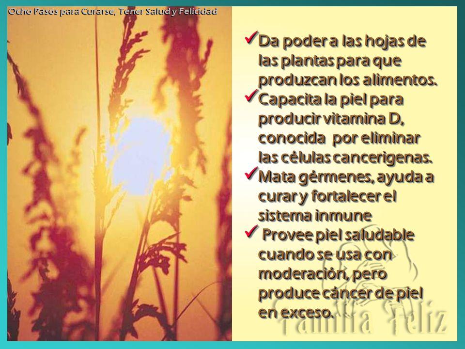 Da poder a las hojas de las plantas para que produzcan los alimentos.