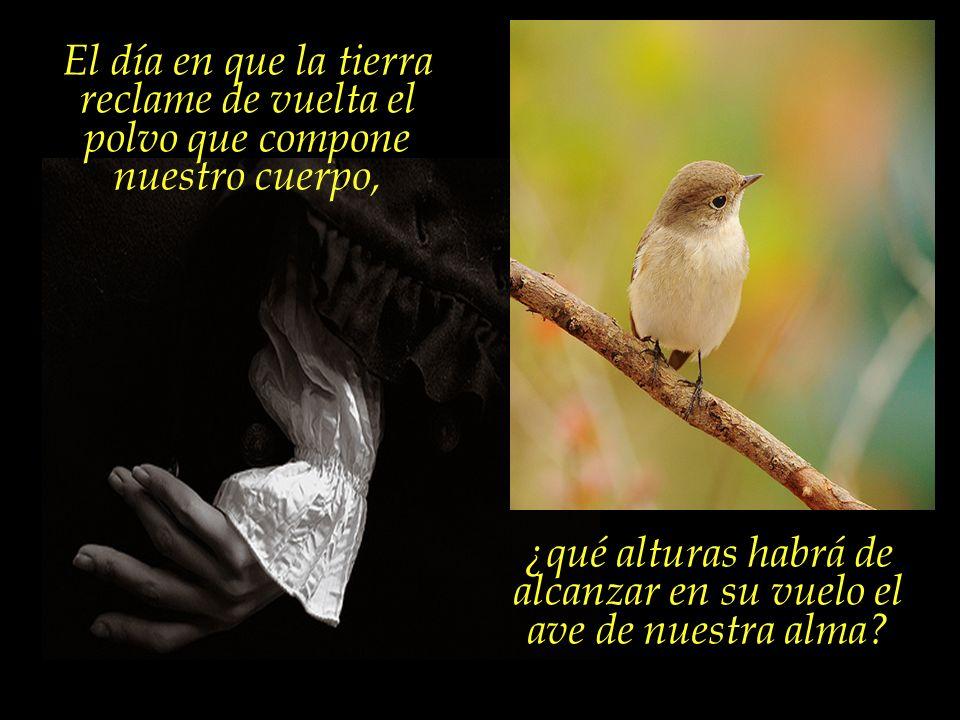 Nada tiene el pájaro que temer, sin embargo, con la destrucción
